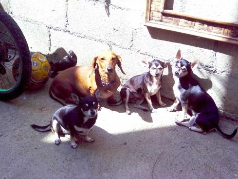 Renne, Vachita, Shane, Syrah  Myrla